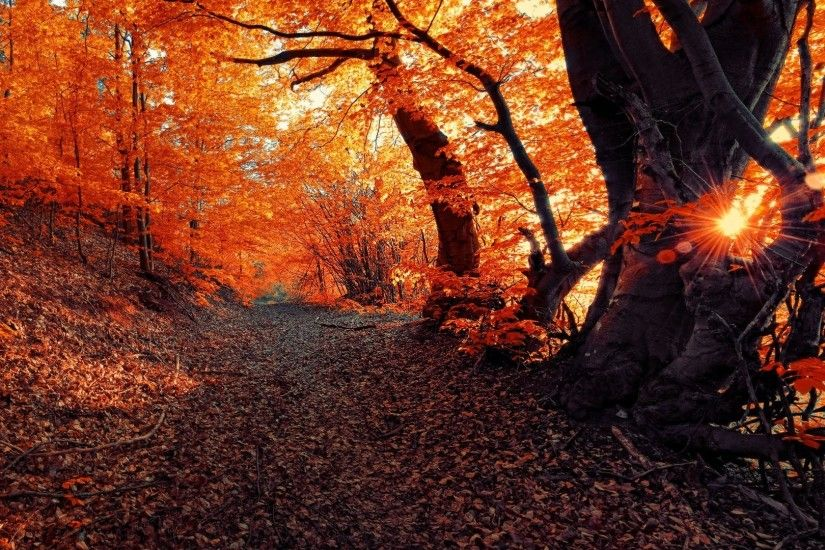 Landscape Fall Seasons Forest Sunset Nature