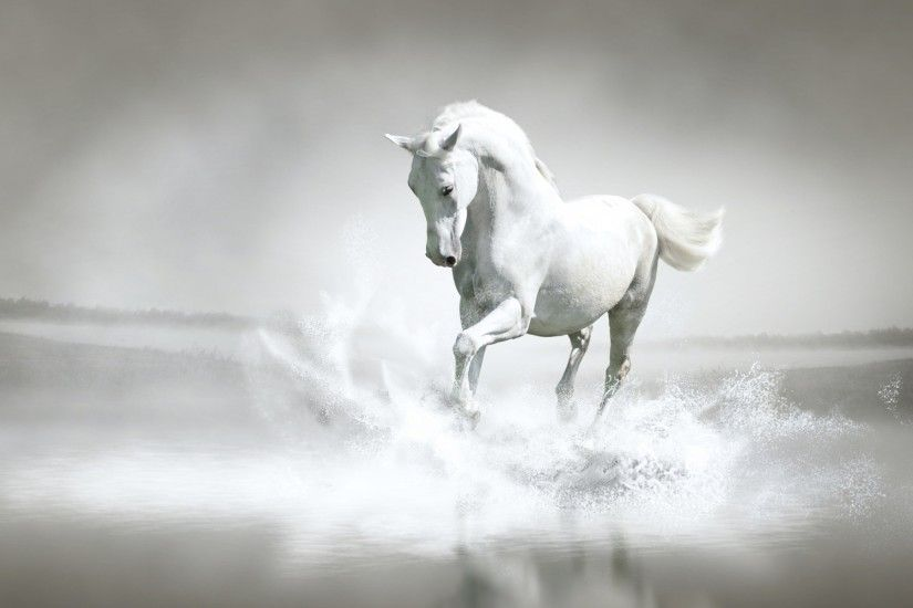 pferdebilder als hintergrund | ... images White Horse ♡ HD wallpaper and  background photos