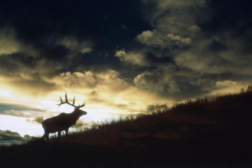 cool deer wallpaper 1920x1080