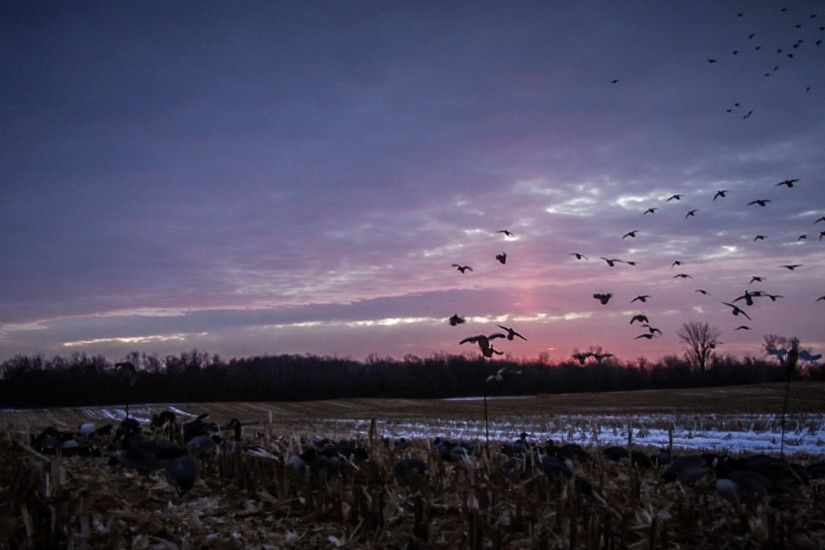 Very Beautiful View Duck Hunting Wallpaper Right Here Really Need To Be  Taken Photograph
