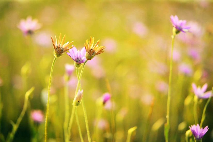 Beautiful wild flowers on meadow in the summer sunbeams. Beautiful spring  background. Closeup Full HD video Stock Video Footage - VideoBlocks