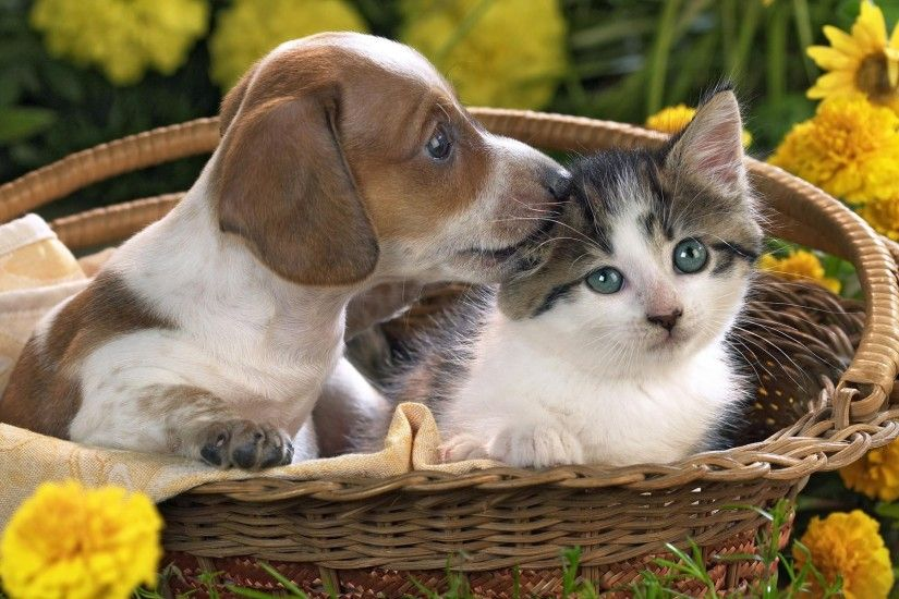 Preview wallpaper puppy, kitten, basket, flowers, friendship 1920x1080