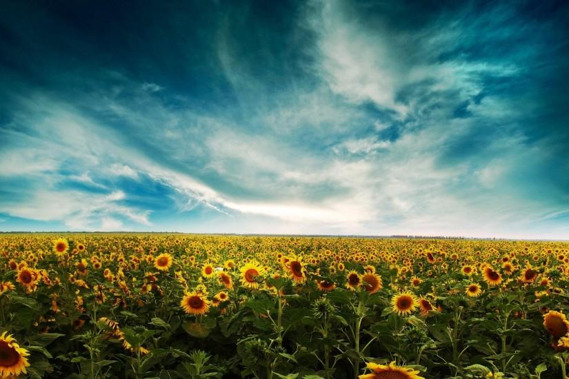 download free sunflower wallpaper 1920x1200 screen