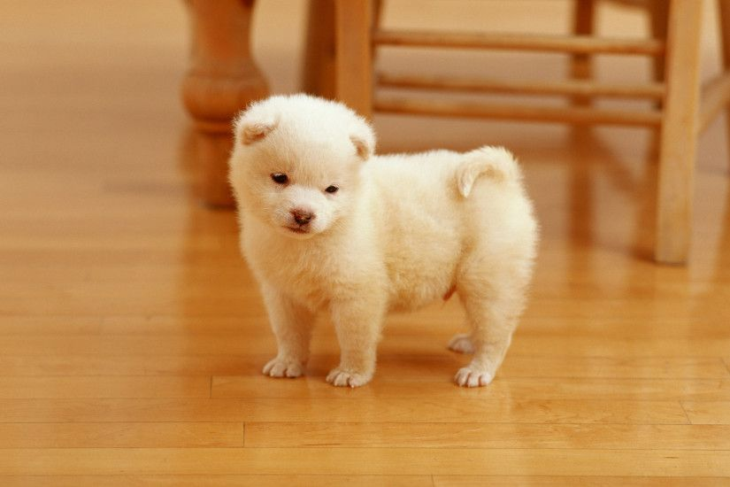 Sweet Cutest Puppy Wallpapers | Hd Wallpapers And Also Cute Puppy Wallpaper