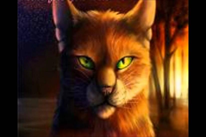 Warrior Cats-The Way i Was