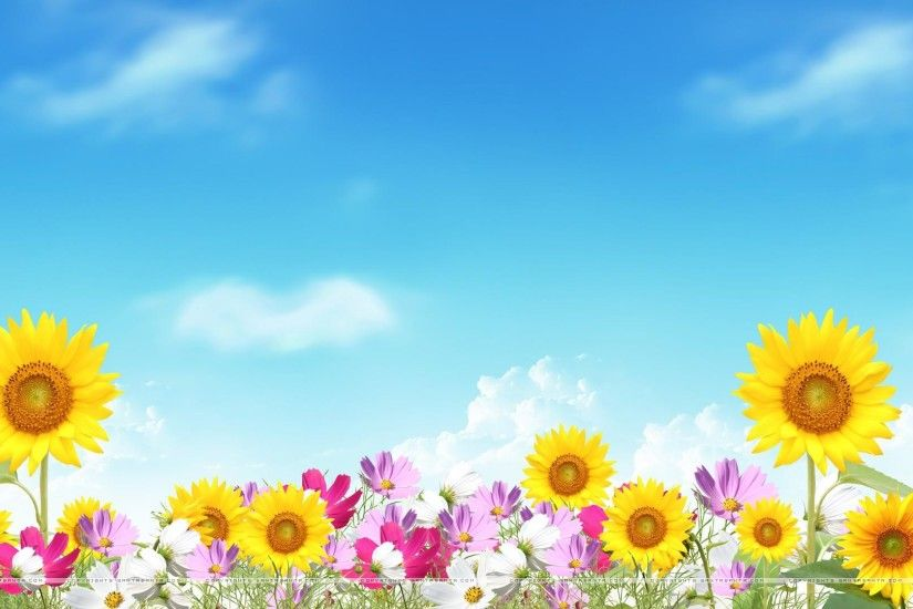 5. summer-flower-wallpaper5-600x338