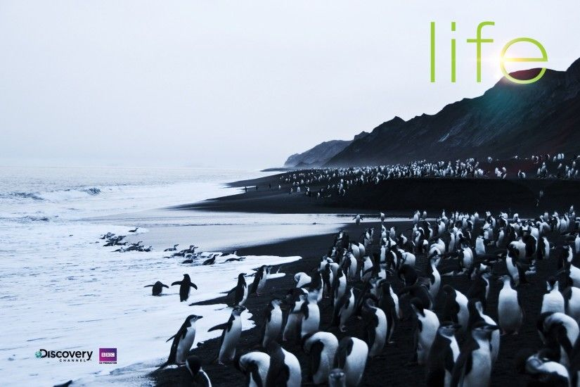 4-life-penguins ...