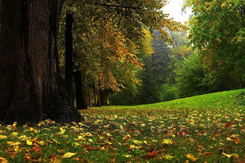 HD Beautiful Forest Wallpaper | Download Free - 64256