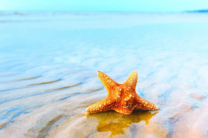 Wonderful Starfish Wallpaper 46364