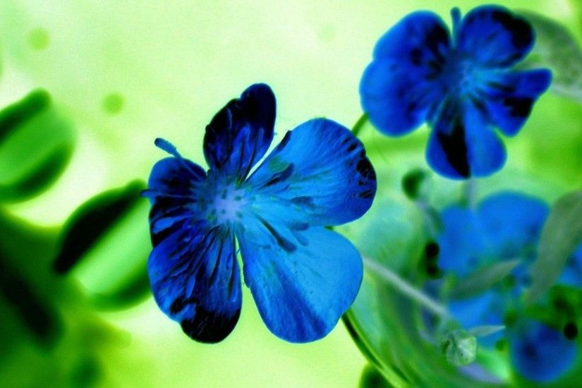 5. blue-flower-wallpaper5-600x338
