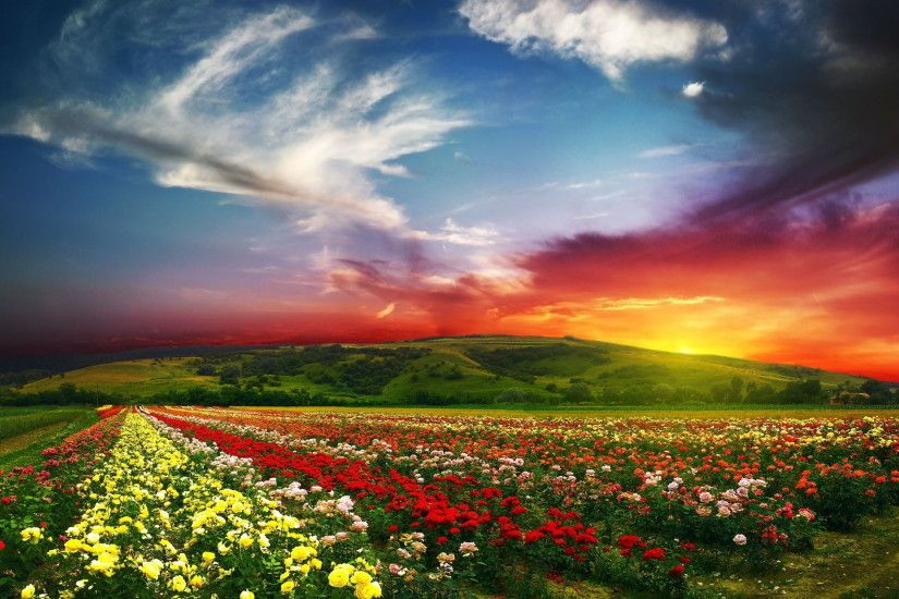 ... Flower-field-sunset-beautiful-hd-wallpapers-free-download-