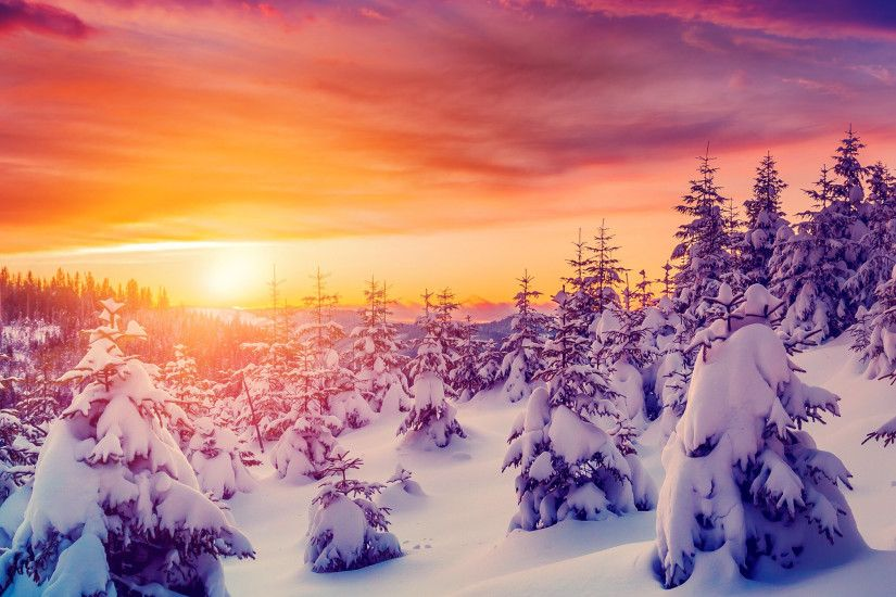 iPad mini Retina, Sunset, Sundown, Sun, Snow, Forest, Frost -