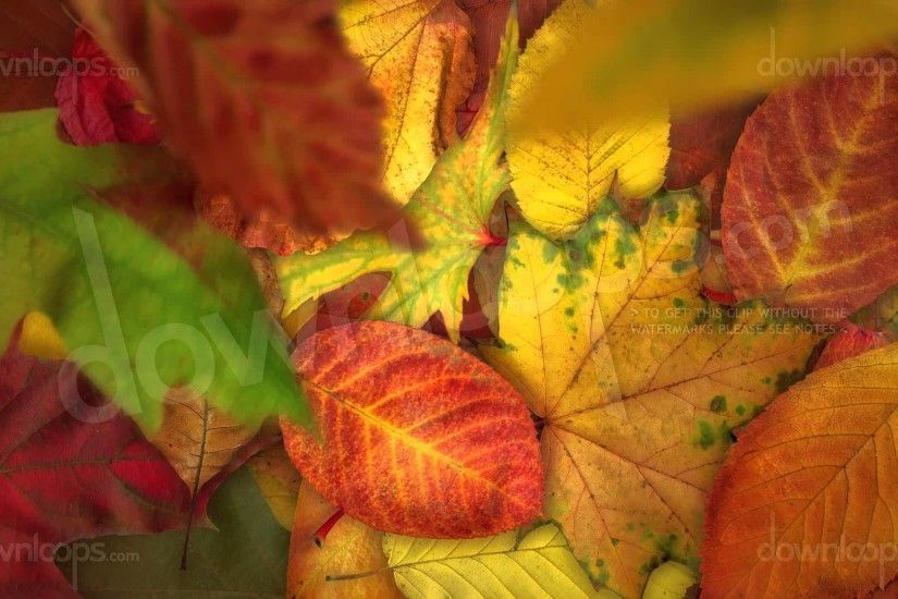 Falling Autumn Leaves - Realistically Moving Motion Background Video Loop -  YouTube