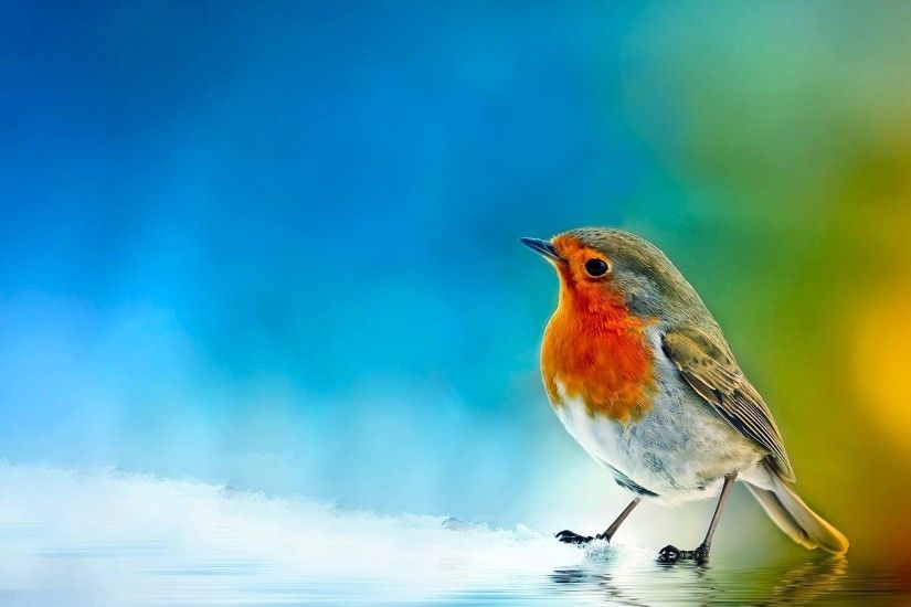 1920x1200 Bird Wallpapers 12667 - HDWPro