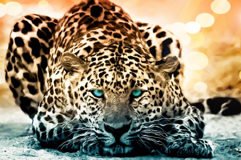 Cool Wild Animal Wallpapers High Resolution For Desktop Wallpaper 1920 x  1080 px 623.08 KB wild