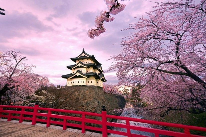 Japanese-Cherry-Blossom-Garden-Background-for-HD-Desktop-