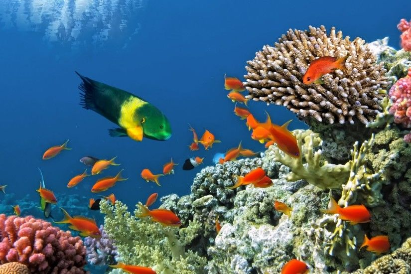 Reef Tag - Fish Ocean Sea Reef Tropical Fishes Underwater Live Wallpaper  Download For Mobile for
