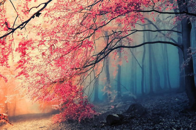 Download: Autumn Glory HD Wallpaper