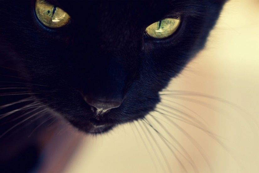 Cool Black Cat Wallpaper 24150