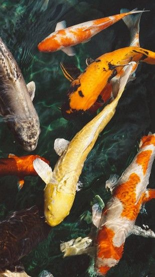 ... Fish Water Animal Swim iPhone 8 wallpaper ...