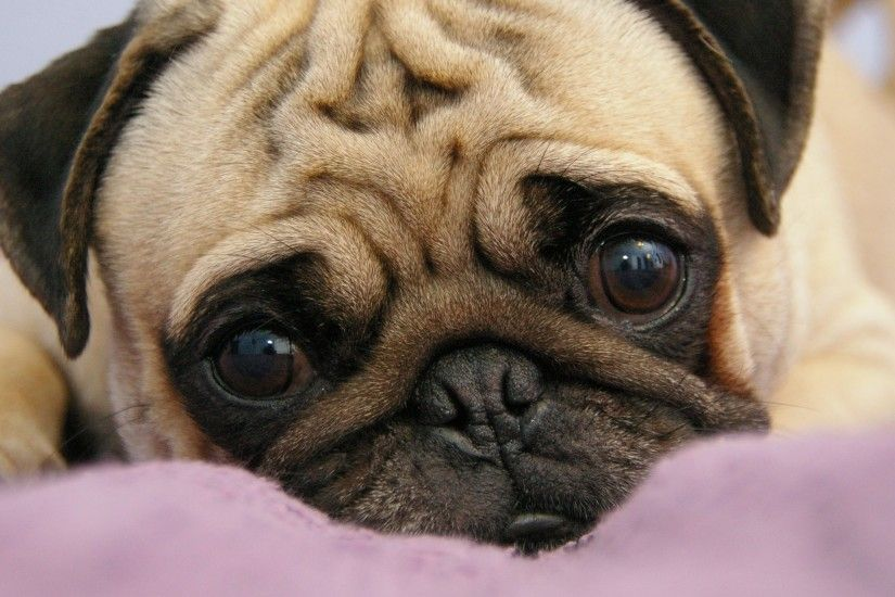 Preview wallpaper pug, puppy, snout, eyes, lie 3840x2160