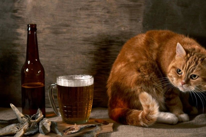 Cat-And-Beer-Funny-Animal-Wallpaper-HD-free-