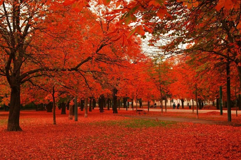 autumn trees and leaves | Red leaves autumn trees Desktop Wallpaper