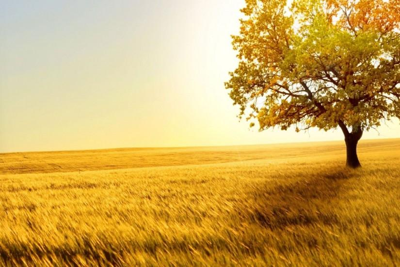 Sunshine background ·① Download free awesome full HD ...