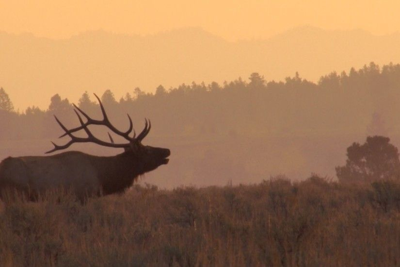 Monster bull elk wallpaper - photo#24
