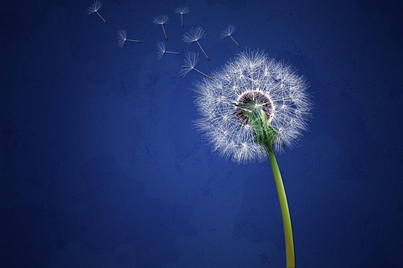 Dandelion Background Wallpaper 30266