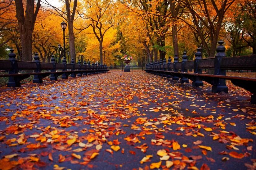 Fall Backgrounds Autumn New York