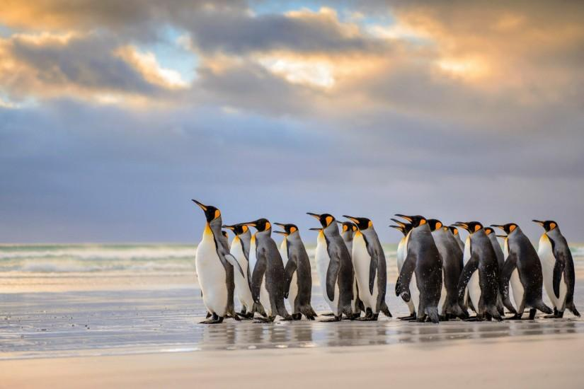 ... Penguin Wallpaper - Beautiful Penguins Wallpaper Gallery ...