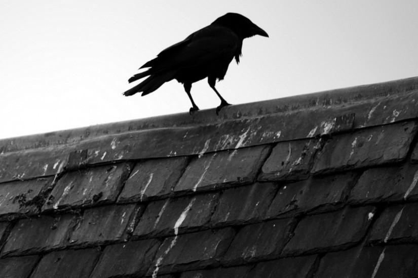 Wallpaper 2048x2048: Raven Wallpaper ·① Download Free Amazing Full HD