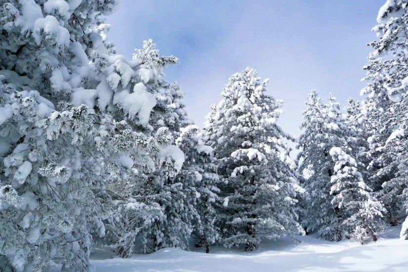 Trees Landscape Nature Winter Forest Tree Desktop Wallpaper Full Size 3D