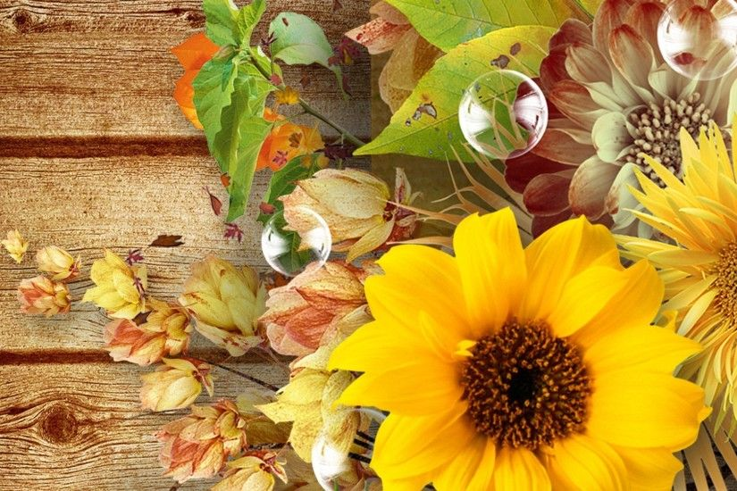 ... sunflowers desktop backgrounds flowers fall flowers autumn boards wood  pods bubbles sunflowers