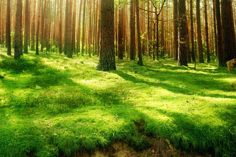 grass wallpaper forest. Â«Â«