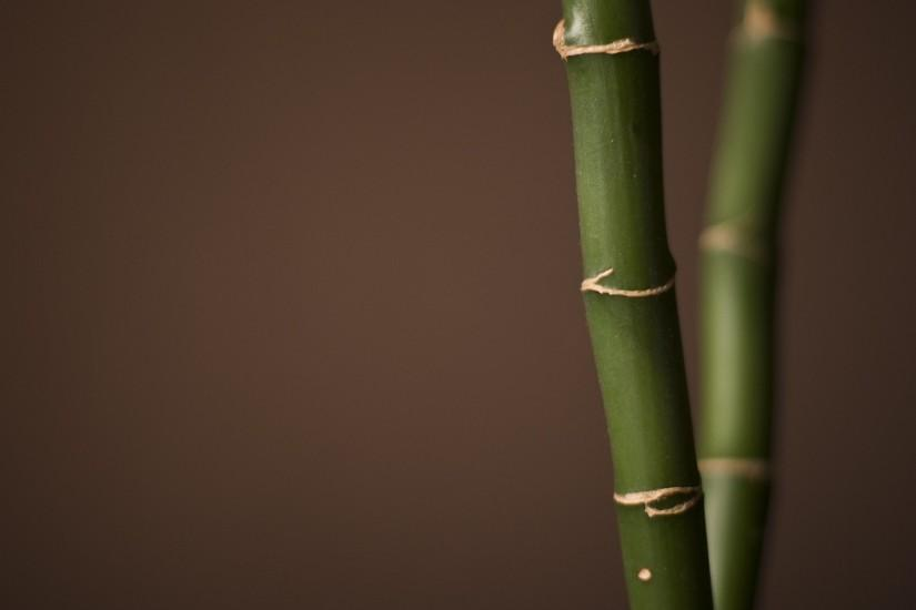free download bamboo wallpaper 1920x1200 photos