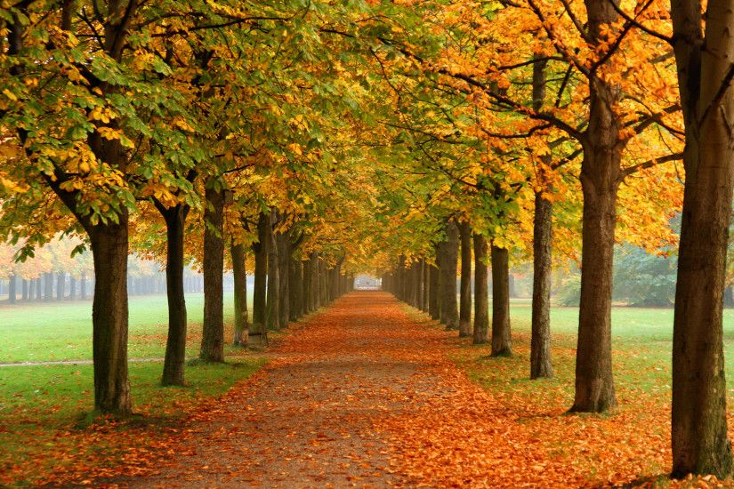 Autumn Trees Wallpaper Autumn Nature Wallpapers) – Free Backgrounds and  Wallpapers