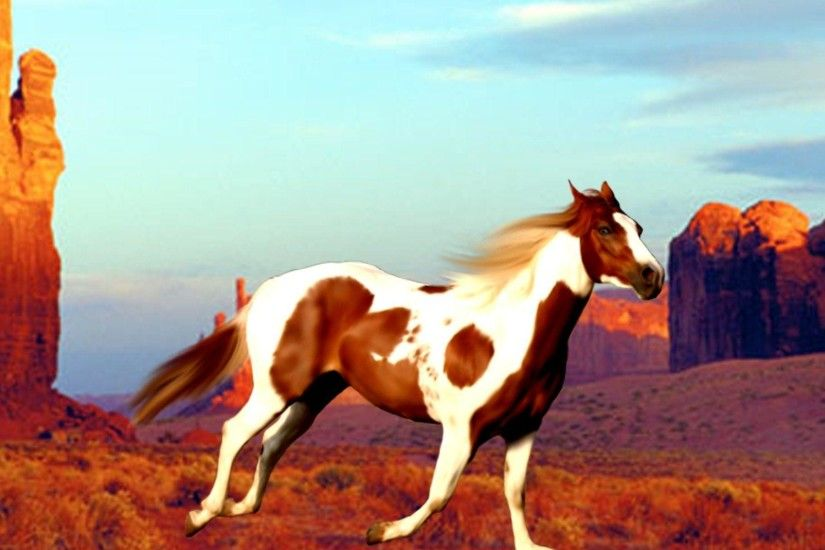 paint horse. wallpapers for u003e paint horse wallpaper w