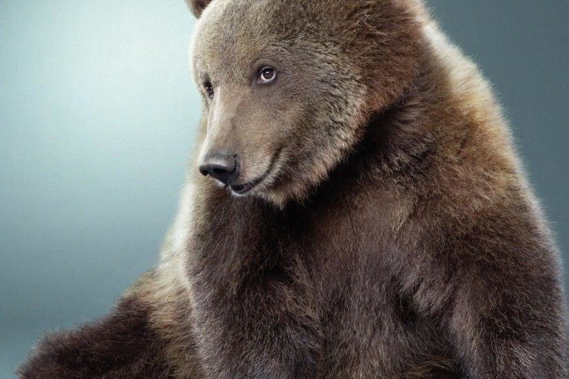 Images-Bear-Wallpapers