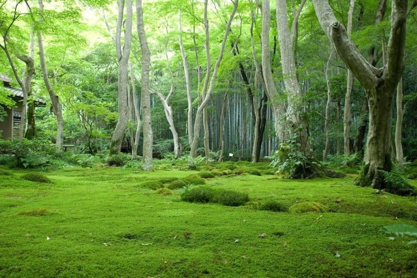 Green Beautiful Forest Woods Nature Forests HD Wallpaper 1080p