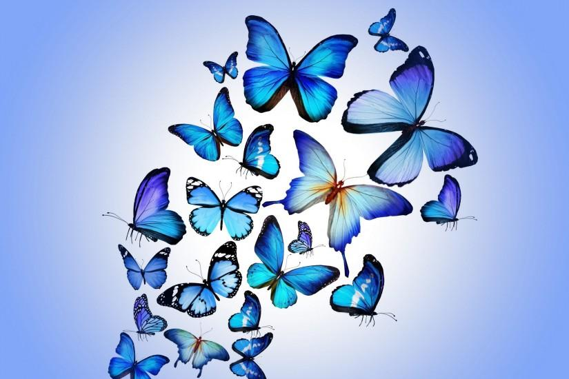 Butterfly Backgrounds For Desktop Wallpaper 2560 x 1600 px 1.2 MB red blue  purple