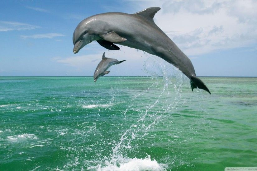 Dolphin Wallpapers for iPad
