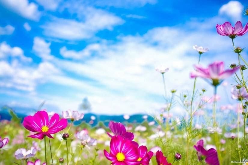 free spring background 1920x1200 for 4k
