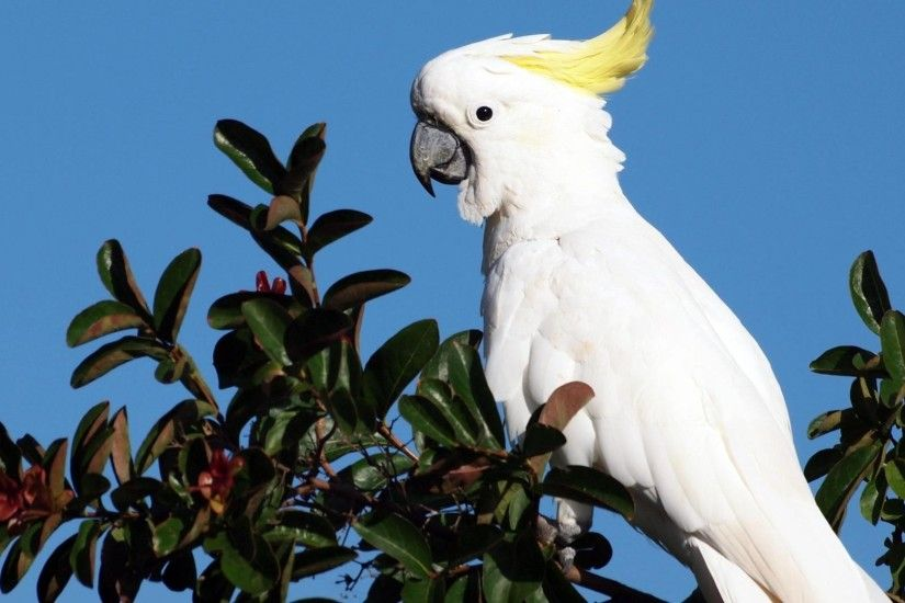 White Parrot, Desktop Screen Photos, Wallpapers-Web.com