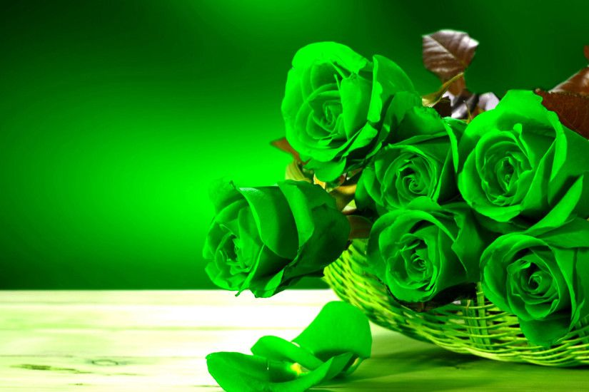 Green Roses HD Wallpapers Pictures