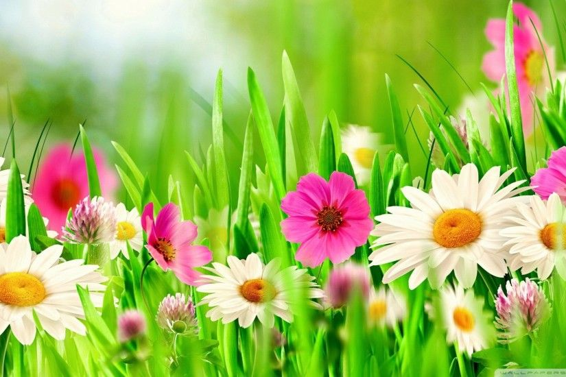 Wallpaper grass with flowers 1920 x 1080 full hd