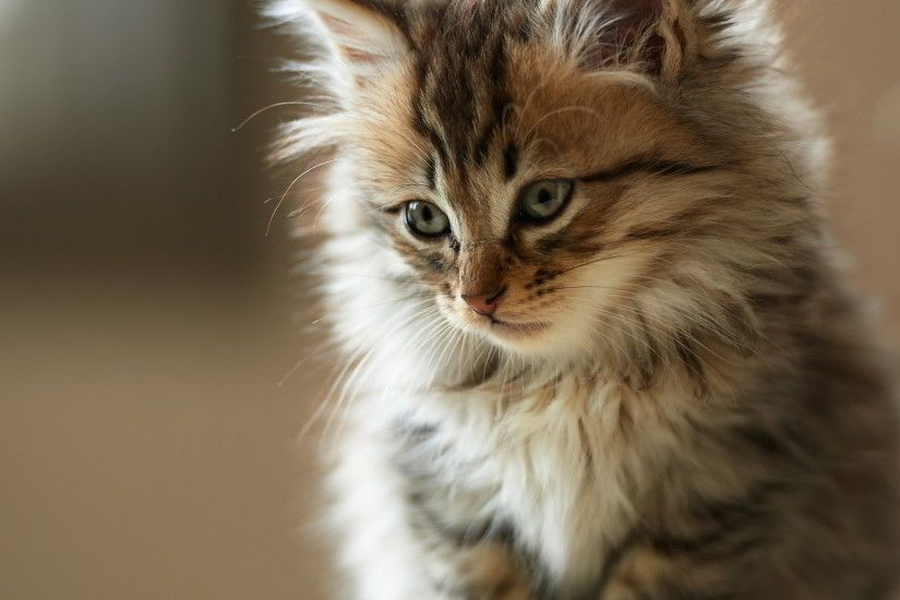 beautiful cat wallpapers. Â«Â«