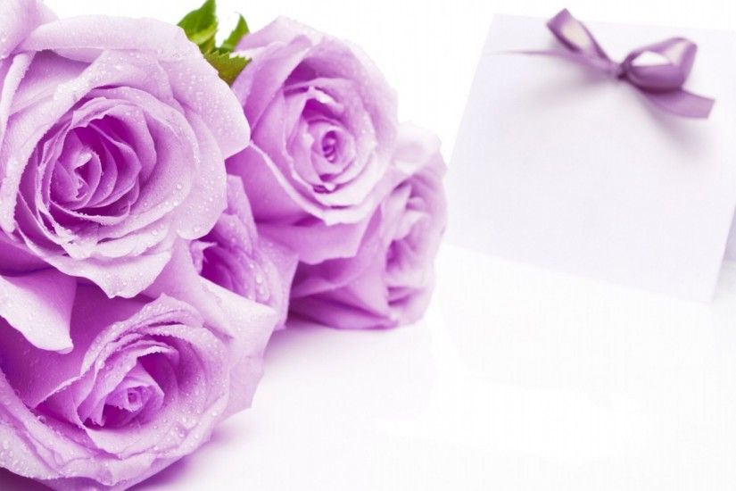 Farben images Purple Rose Hintergrund HD wallpaper and background photos