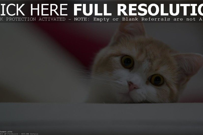 The Most Beautiful Cute Japanese Cat Wallpaper Widescreen
